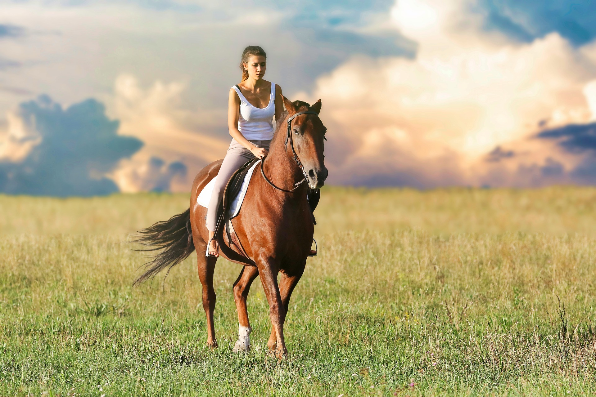 Horse Tack Supplies Online